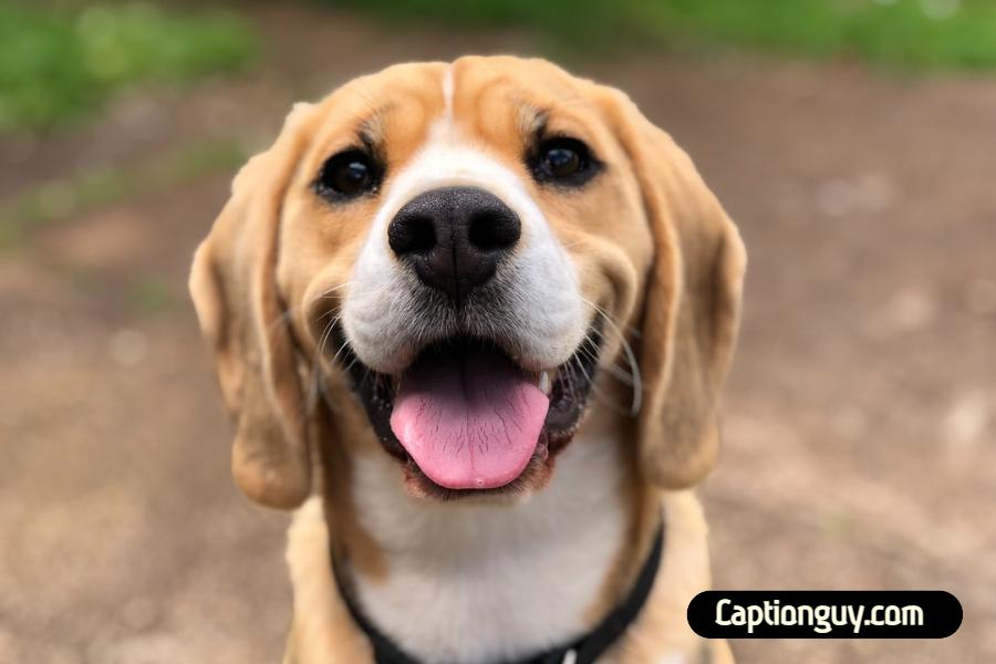 Best Dog Captions for Instagram
