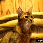 Best Cat Pick up Lines for Instagram