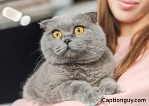 Cats With Captions
