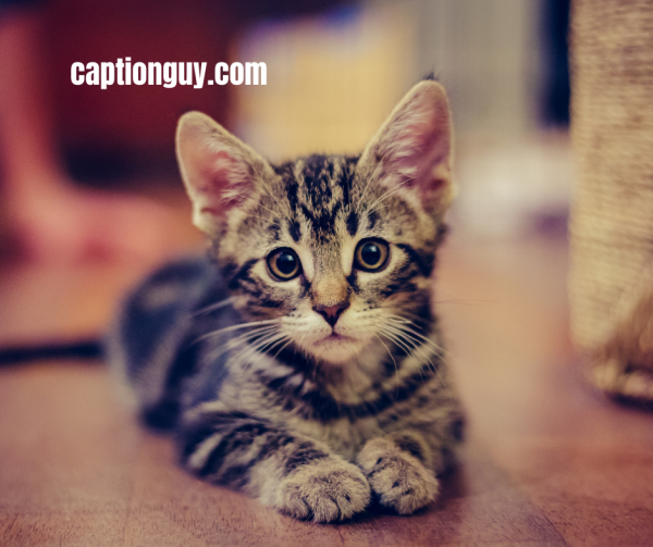 Kitten Pictures With Captions