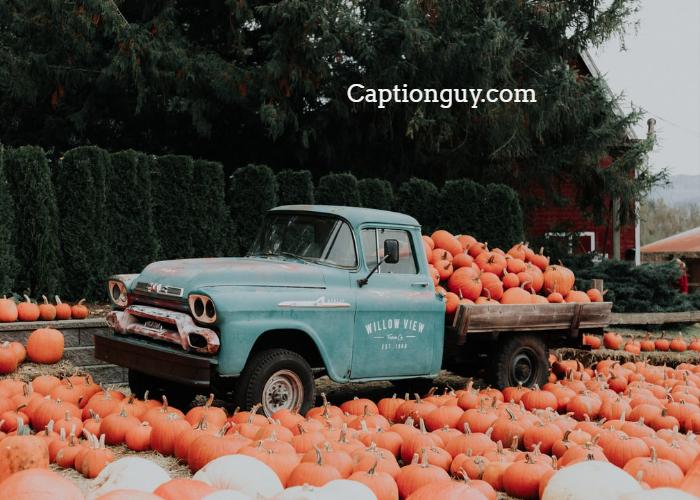 Pumpkin Patch Captions