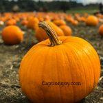 Pumpkin Captions for Instagram